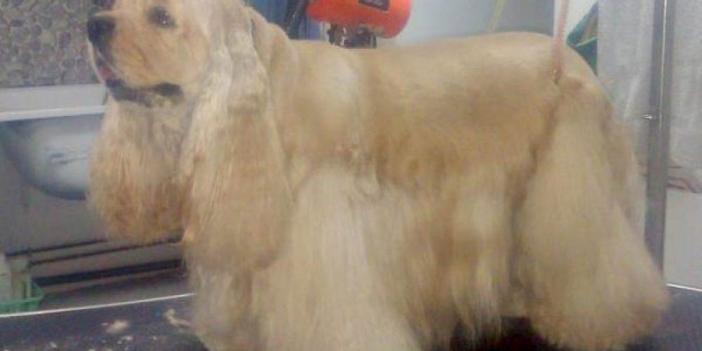 Peluquería canina en Estepona
