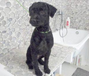 Corte de pelo para perros en Estepona